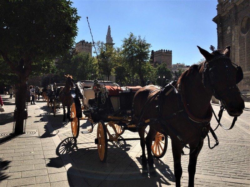 Horses in Seville