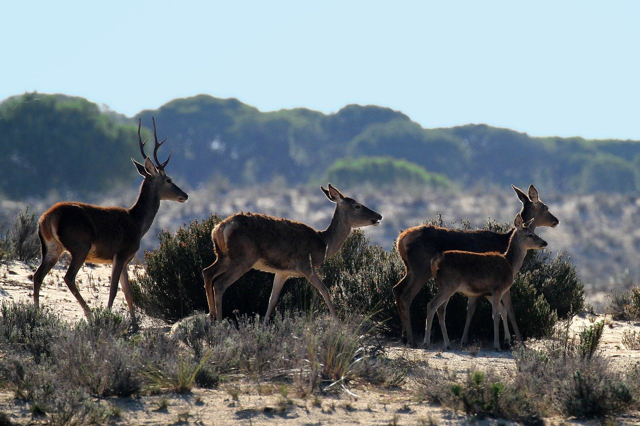 Spain National Parks (Doñana)