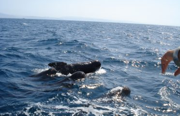Whale watching in Spain