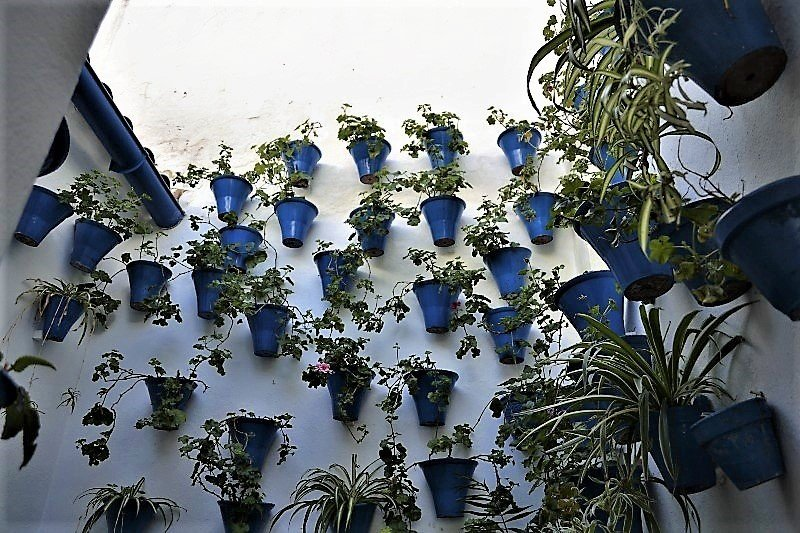blue flower pots in a white wall