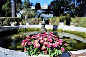 Flower and fountain in a patio