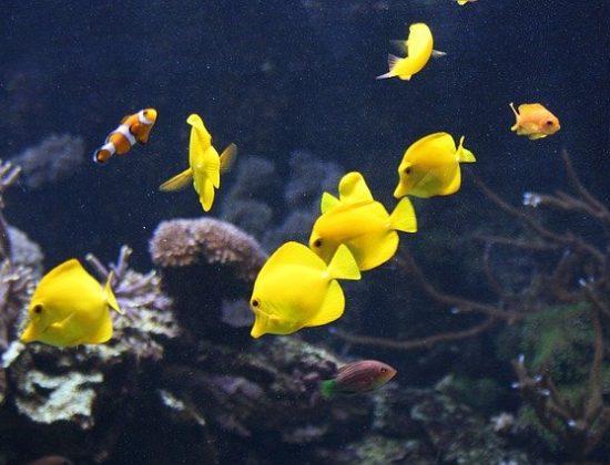 L'Oceanogràfic : Valencias amazing oceanographic