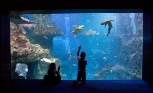 san sebastian aquarium