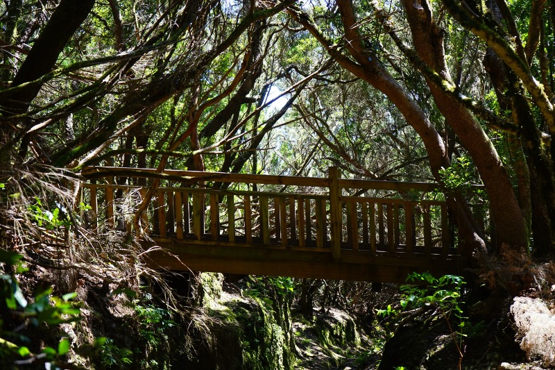 Wooden bridge in the forest of Anaga in Tenerife