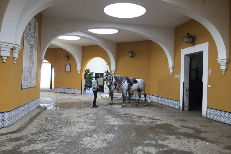 Horse inside equeastrian horse school in Jerez