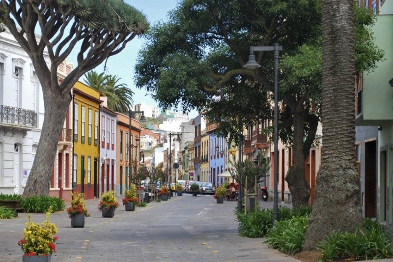 Street and drago tree in La Laguna
