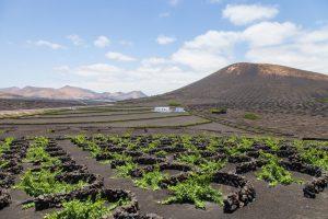 Lanzarote vineyard landscape