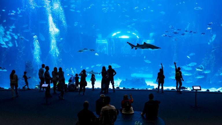 Poema del Mar aquarium, Las Palmas, Gran Canaria
