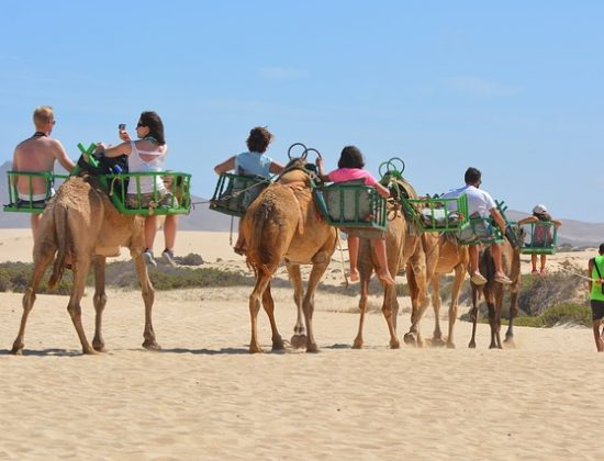 Camel Ride Maspalomas dunes: the best way of experiencing a unique ecosystem