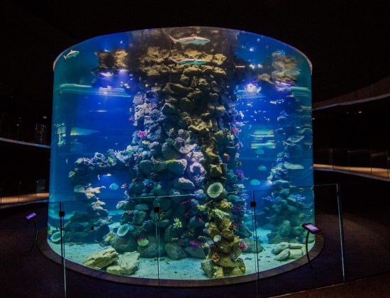 Poema del Mar Aquarium: The best aquarium of Gran Canaria