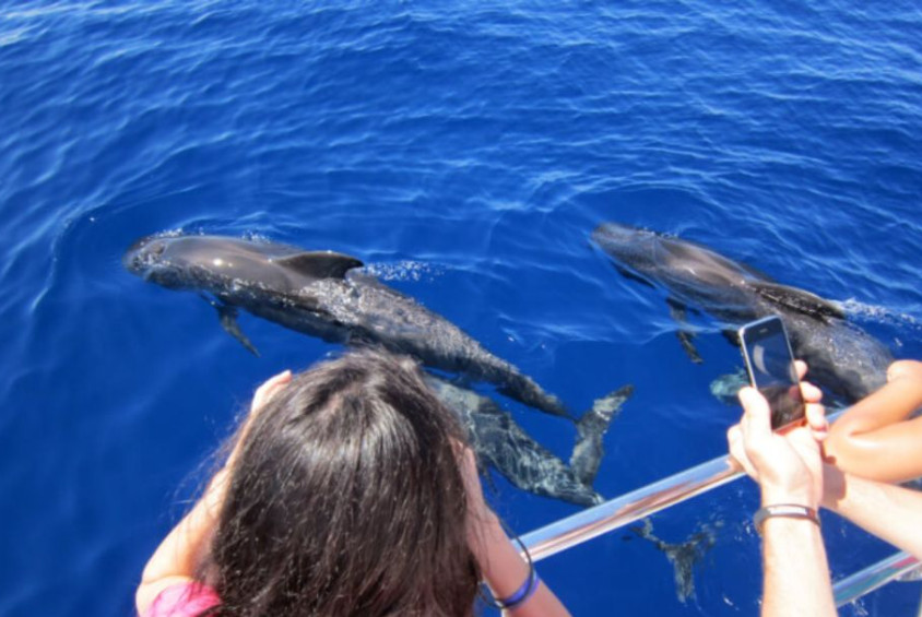 whale watching gran canaria