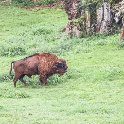 Cabarceno park in Cantabria: gorgeous open enclosure zoo in Nothern Spain